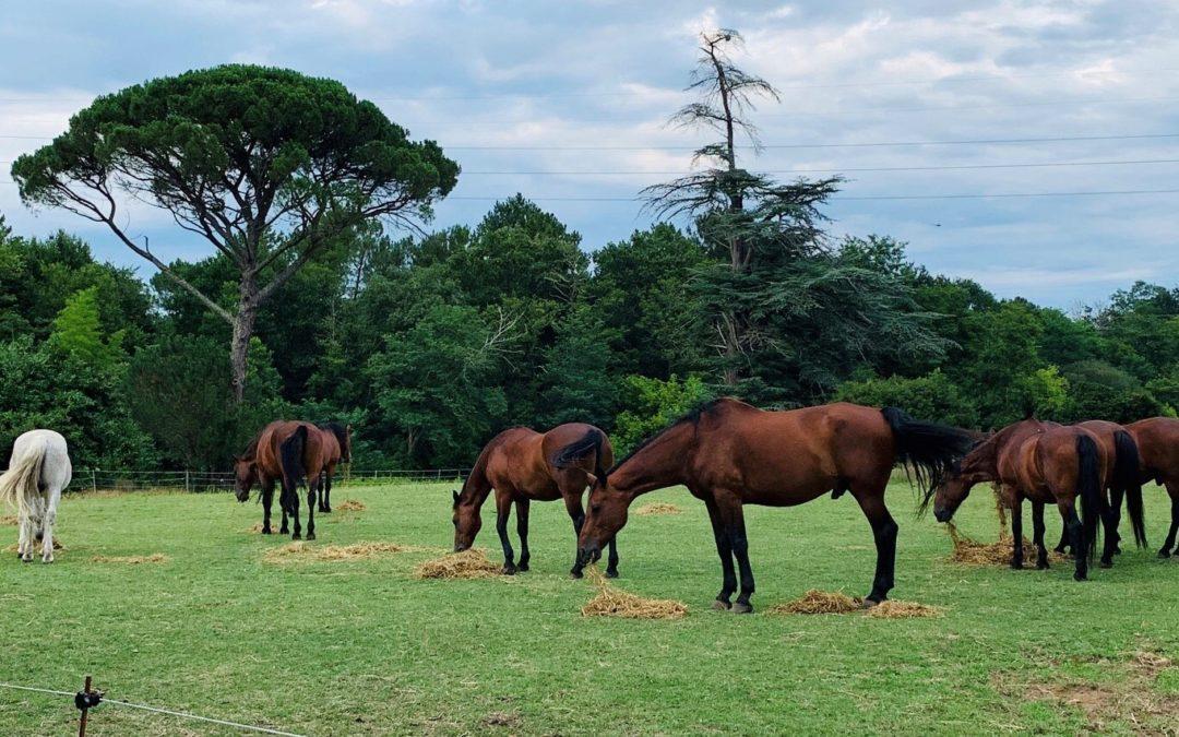 La responsabilité du fait de l'animal appliquée au cheval (équidé)